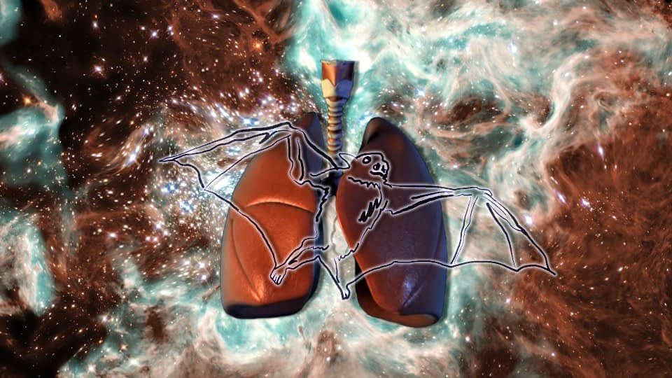 Cutout of a medical illustration of human lungs against a warped rendering of a galactic formation. A drawn image of a bat is superimposed on the lungs.