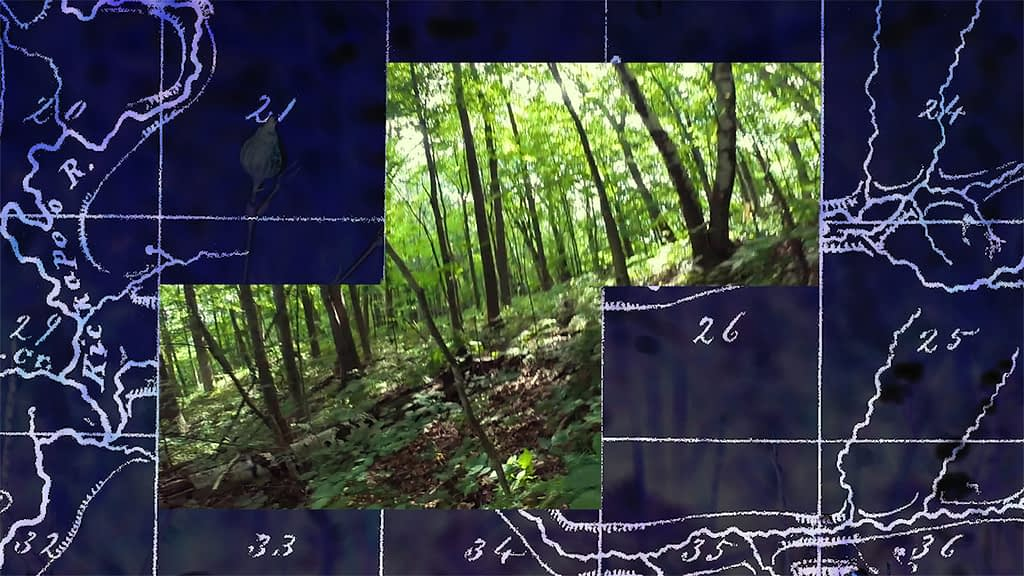 Composite image showing forest inset in two overlapping rectangles inside a purple-tinted antique map
